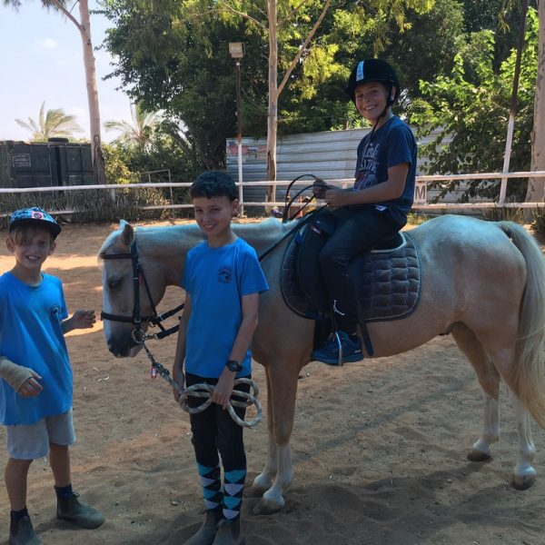 Therapeutic horseback riding to handle attention disorder disability and learning impairments
